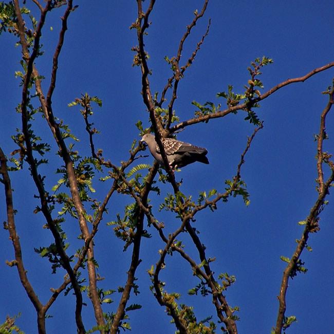 la-casa-del-agua-naturaleza-paloma