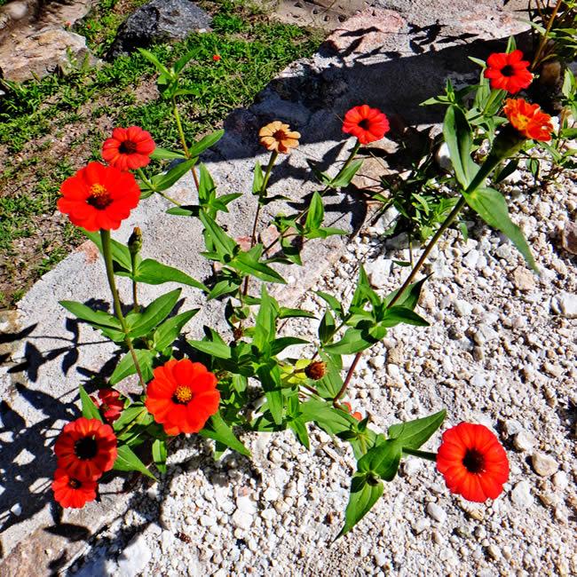 la-casa-del-agua-naturaleza-flores